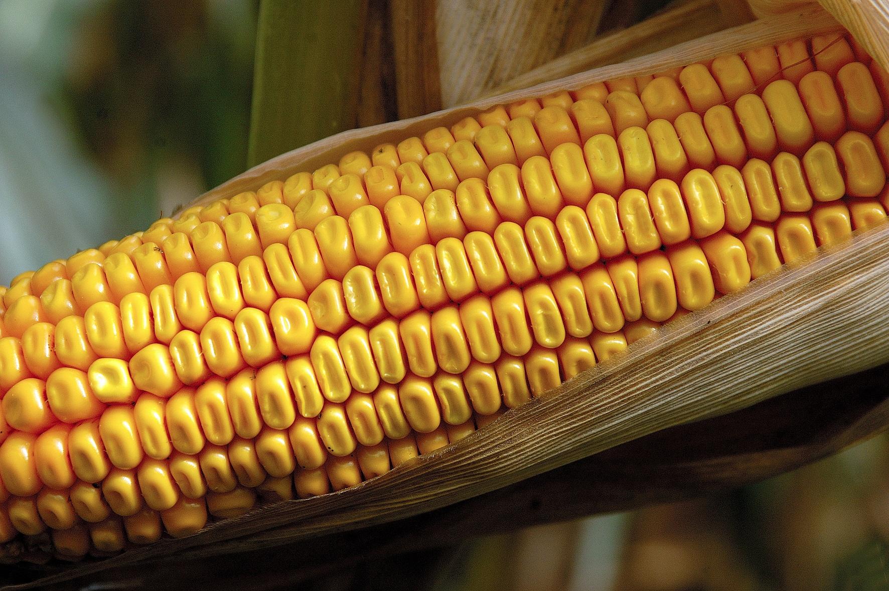 Jetzt ertragsstarke Sortenleistung sichern und Saatgutkosten sparen